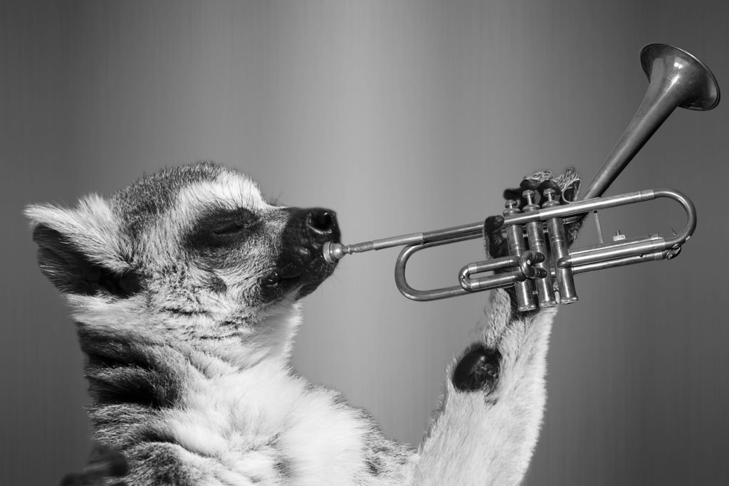 trompete-affe