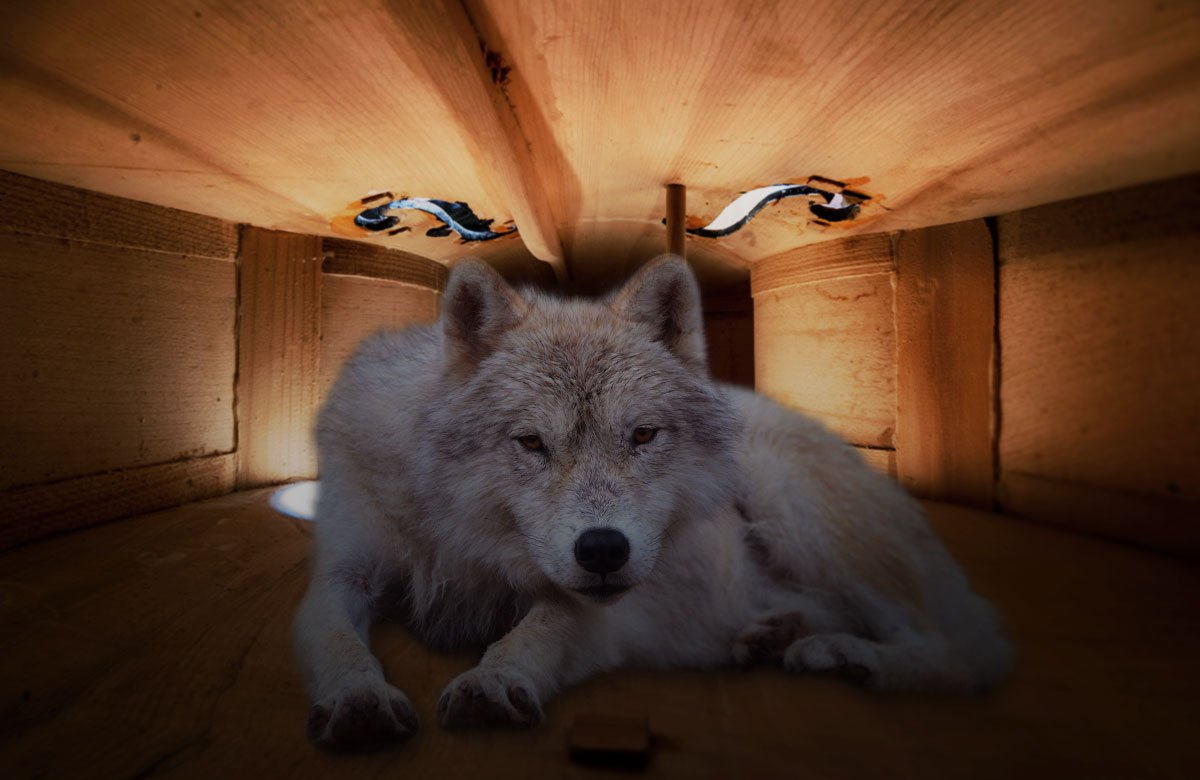 Wolf Zähmen